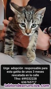 Gatita en adopción responsable