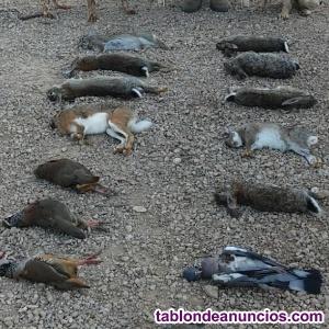 Acciones para coto privado de caza menor