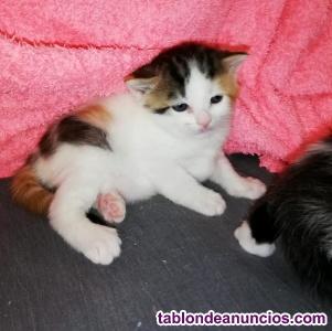 Adopta a los gatitos milagro