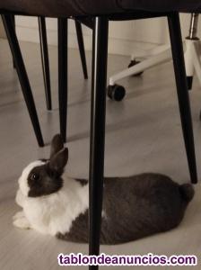 Regalo Conejo Enano Toy