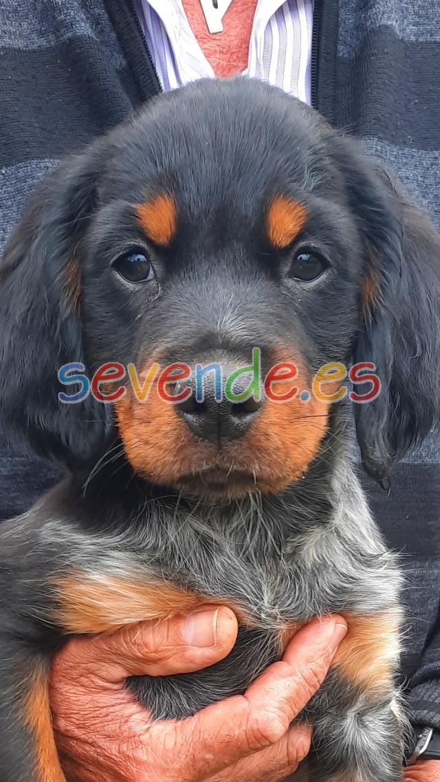 Precioso cachorro