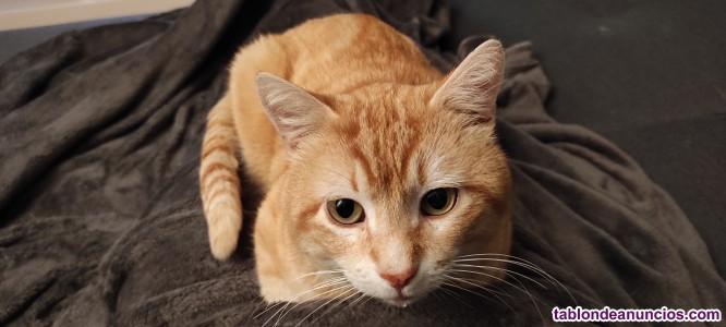 Gato Naranja - 4 años - Muy Simpático