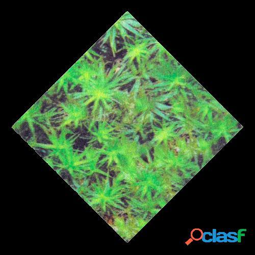 Herbitas Forro Microfibra Musgo M2